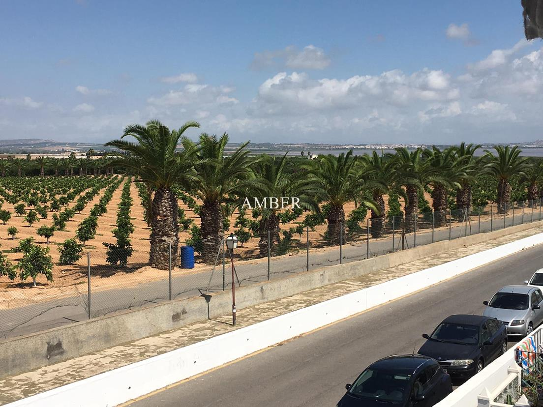 Top floor apartment ovelooking orange groves, Torrevieja
